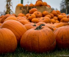 Halloween Quotes : fallen leaves, pumpkin pies and cozy weather — tumblin' by len… Halloween Quotes, Fall Halloween, Samhain Halloween, Halloween 2019, Halloween Stuff, Happy Halloween, Autumn Cozy, Fall Winter, Fall Days