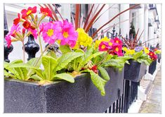 Spring has Arrived in Tourism London, London Street, Spring Time, Plants, Plant, Planets