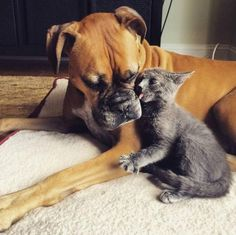 Dog Loves Foster Kittens So Much Her Mom Adopts One For Her