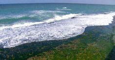 Documentos mostram que tsunami atingiu costa brasileira século XVIII Estima-se que 30 mil morreram após terremoto e tsunami em Portugal. No Brasil, onda pode ter chegado com altura que varia de 2 a 6 metros.