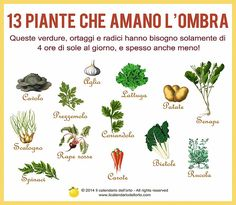 Il Calendario dell'Orto Backyard Plants, Outdoor Plants, Garden Landscaping, Outdoor Gardens, Eco Garden, Garden Planters, Greenhouse Gardening, Vegetable Garden Planner, Growing Greens