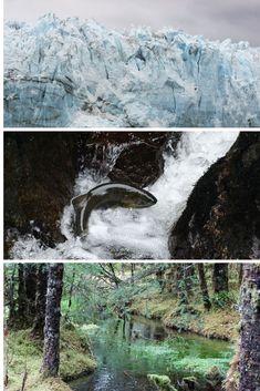 Alaska: My Cruise Experience #alaska #cruise