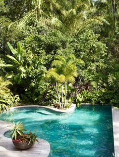 The property's free-form swimming pool is set against a backdrop of verdant rain forest.