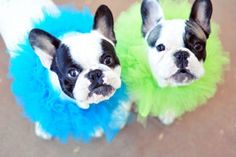 poochie projects http://www.lovemaegan.com/2014/11/diy-elizabethan-ruffle-clown-collars-for-your-pets.html