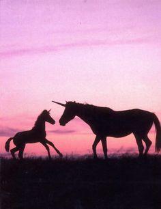 Cause yes I believe in Unicorns. #smirnoffsorbet