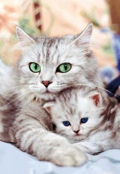So Sweet!   the mama with beautiful green eyes that POP! and the adorable little kitten with blue eyes.... ADORBS!