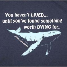 Whale Wars. The sea shepherd