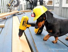 Dr. Crusoe: Oakley Gets a Check-up - Crusoe the Celebrity Dachshund
