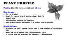 Perilla - a fragrant flavour enhancer