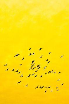 Birds flying on yellow