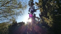 #wonderful #sunset in the #forest above #carini.  #sun #tree #nature