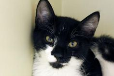 Norway has been adopted from the Seattle Humane Society :-)