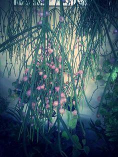 Flor - V casa da Da. Cida