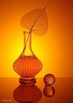 Explore amazing art and photography and share your own visual inspiration! Orange Brown, Orange Yellow, Orange Color, Orange Twist, Orange You Glad, Orange Is The New, Orange Aesthetic, Oranges And Lemons, Coral
