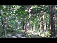 自然の音景色L  森の春1(野鳥の鳴き声・長時間)Nature Sound
