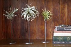 Thigmotrope Perch - Web Shop - Flora Grubb Gardens