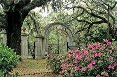 The beauty of Savannah, GA.  - Wormsloe