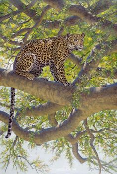Leopard painting by Guy Coheleach