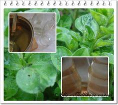 Jedlíkovo vaření: Mátový sirup s citronem