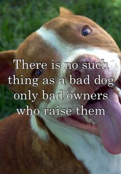 There is no such thing as a bad dog only bad owners who raise them