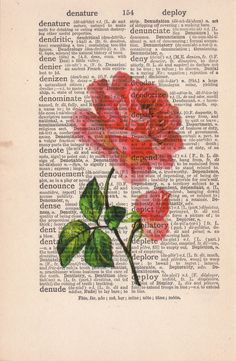 Rose print on book page