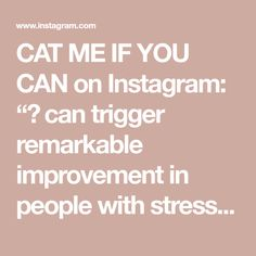 """CAT ME IF YOU CAN on Instagram: """"🐈 can trigger remarkable improvement in people with stress disorders, anxiety and depression. The purring is very relaxing, stimulates…"""" Stress Disorders, Depression, Anxiety, Relax, Canning, Cats, People, Instagram, Gatos"""