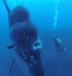 aquarium for all fish blogspot: WoW big fish in the world
