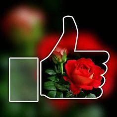 Good Morning Gif, Good Morning Images, Garden Rack, Emoji Images, Love Messages, Good Job, Emoticon, Beautiful Roses, Smiley