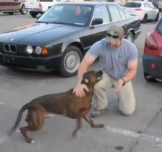 Man's Best Friend: Video of Dog Welcoming Soldier Home Goes Viral