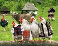 Ukrainian Chickens - even the hens have a Ukrainian cultural identity! I wonder if these ones lay Pysankas! Chicken Life, Hen Chicken, Chicken Art, Chicken Coops, Farm Animals, Animals And Pets, Funny Animals, Cute Animals, Don Pollo