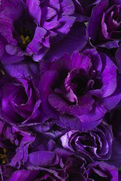 Purple flowers <3