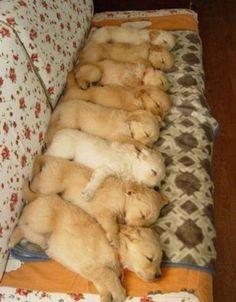 Puppy row.
