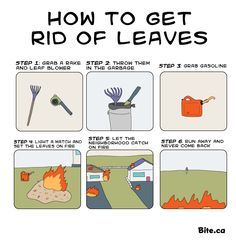 How to get rid of leaves