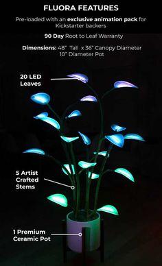 Fluora - The Magical LED Houseplant by Aaron Oppenheimer — Kickstarter