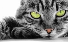Green cat eyes cute animals eyes cats stripes pets fluffy furry