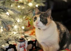10 Holiday Pet Dangers Lurking in Your Home - http://www.bunnybits.org/10-holiday-pet-dangers-lurking-in-your-home/