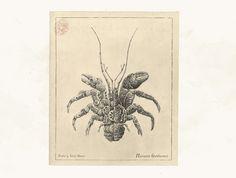 Mechanical / Biological [Crustacean Study] on Behance