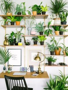 Grow These Plants to Enhance Productivity in Study Room