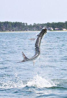 Tarpon Fishing - Location X