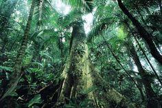 Objetivo do inventário é evitar desaparecimento de espécies e preservar biodiversidade | Leonardo Milano/ICMBio
