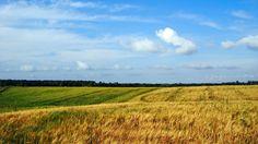 Earth Field  Wallpaper