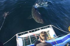 Would definitely do again! I went on the AirJaws trip last month July with African Shark Eco-Charters and had a great time The Great White, Great White Shark, To Go, African, Ocean, Boat, Eyes, Amazing, Trips