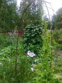 Tee se itse -ideoita puutarhaan : Rauta ja metalli