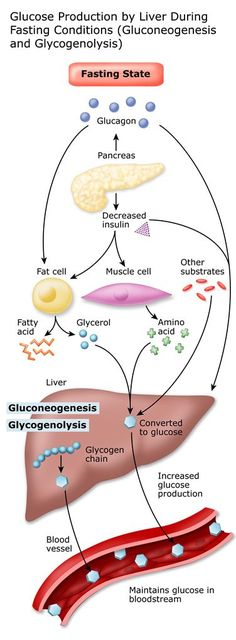 Gluconeogensis and glycogenolysis