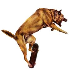 Dog doing the ollie! by giuse.nl, via Flickr