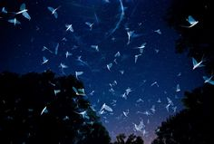 Swarming Under The Stars By Imre Potyó, Hungary / Wildlife Photographer Of The Year 2016 Finalists