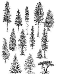 como desenhar árvores 1