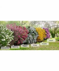 Photo Collection 'la Haie des quatre saisons'- 6 arbustes branches) Photo Collection & The Hedge of the Four Seasons – 6 shrubs branches) Garden Design, Garden Landscape Design, Garden Shrubs, Backyard Landscaping Designs, Outdoor Gardens, Hedges, Garden Planning, Landscape, Backyard