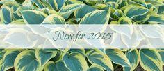 newfor2015