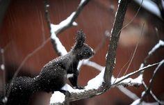 """""""WWWHHHUUUTTTT???? Snow fell in Sheffield?? In APRIL??!?!!?!"""" Meh...got my fur innit."""